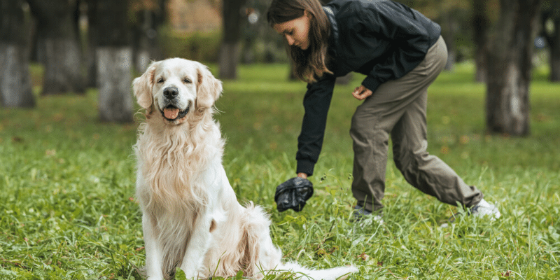 How to Dispose Of Dog Poop Properly
