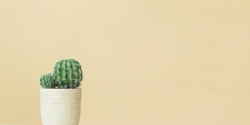 How to dispose of cactus
